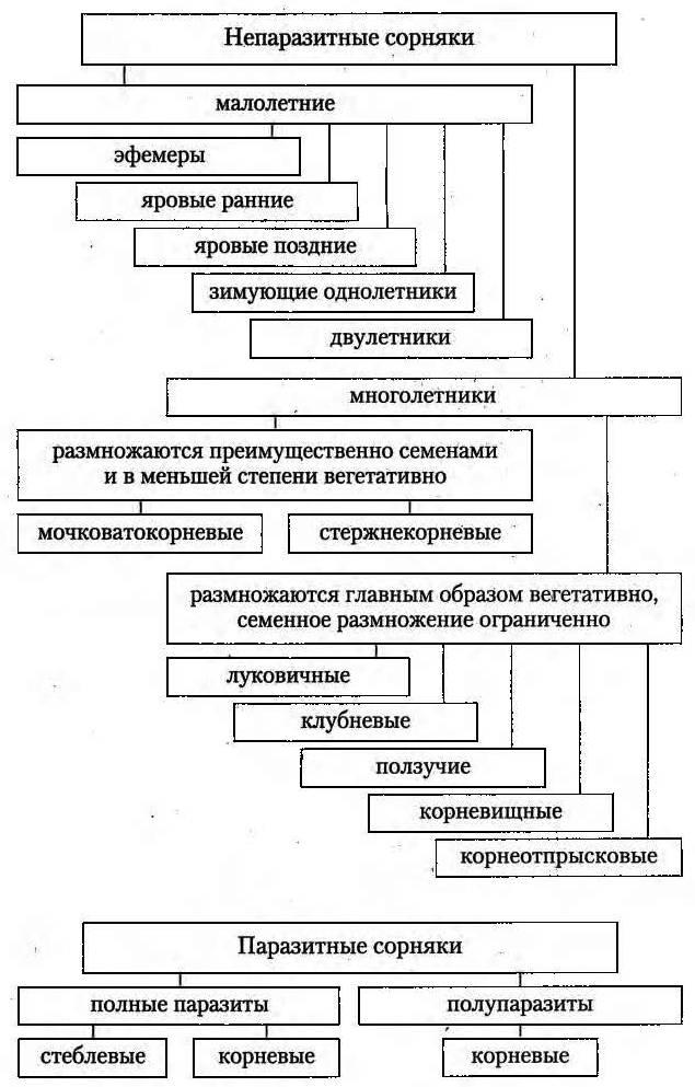 Классификация сорняков