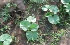Строение сорных растений
