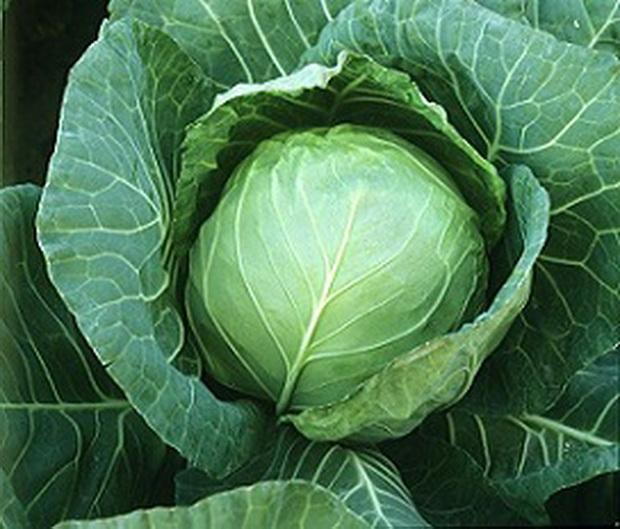 Сорт капусты белокочанной: Суджетсу   f1