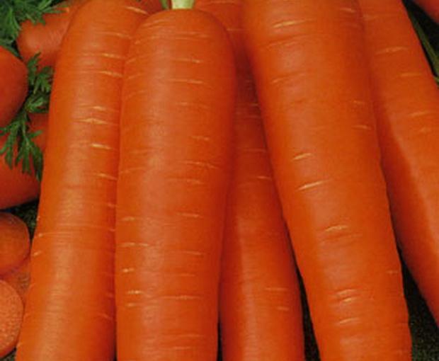 Сорт моркови: Супер мускат