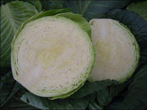 Сорт капусты белокочанной: Циклоп   f1