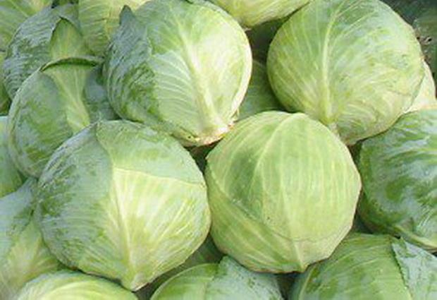 Сорт капусты белокочанной: Циркон   f1