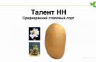 Сорт картофеля: Талент