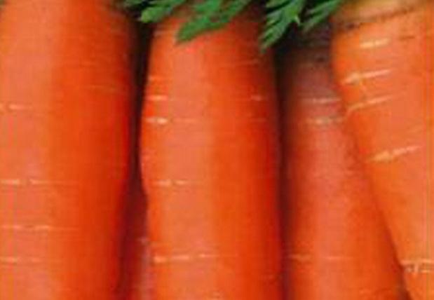 Сорт моркови: Тинга   f1