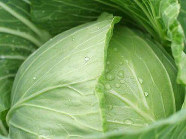 Сорт капусты белокочанной: Точка