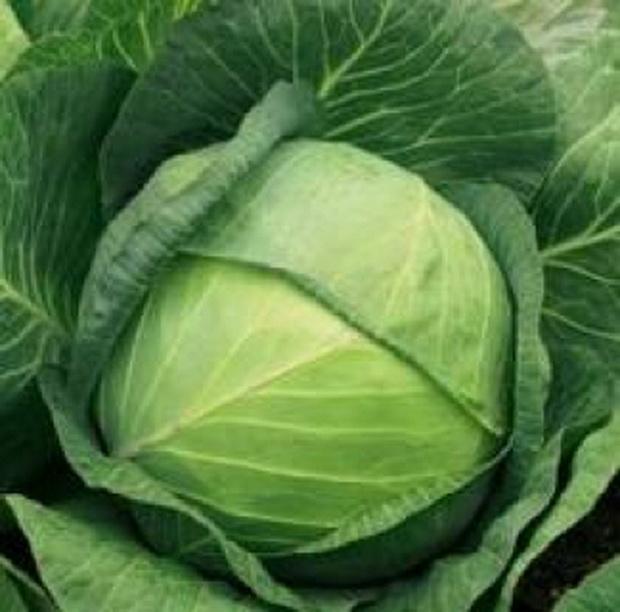 Сорт капусты белокочанной: Толеро   f1