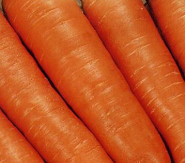 Сорт моркови: Топаз   f1