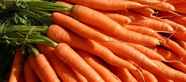 Сорт моркови: Тотем   f1