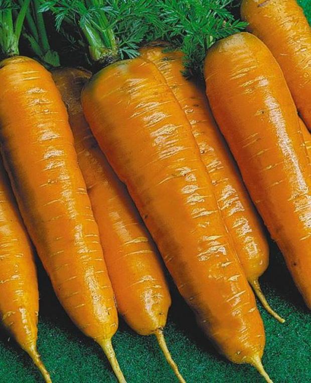 Сорт моркови: Тушон