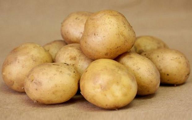 Сорт картофеля: Утро
