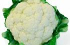 Сорт капусты цветной: Ванила айс