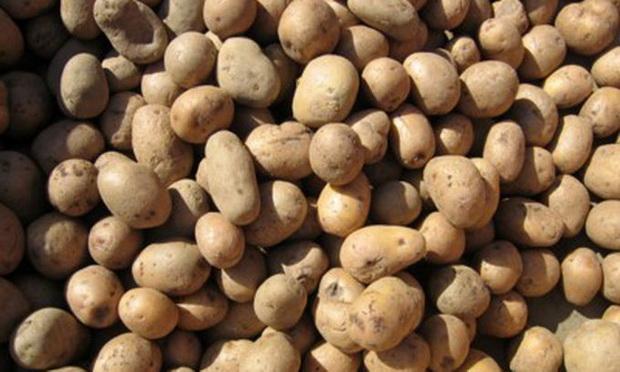 Сорт картофеля: Виза