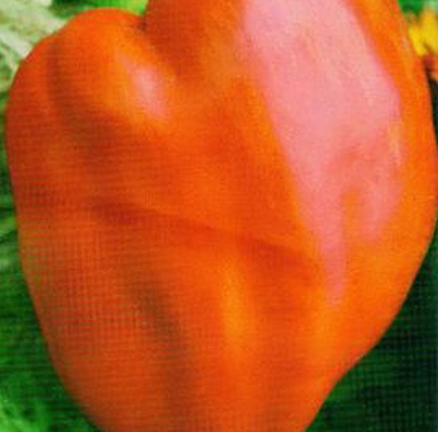 Сорт перца сладкого: Вождь краснокожих