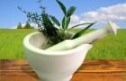 Вредители растительного сырья и меры борьбы с ними