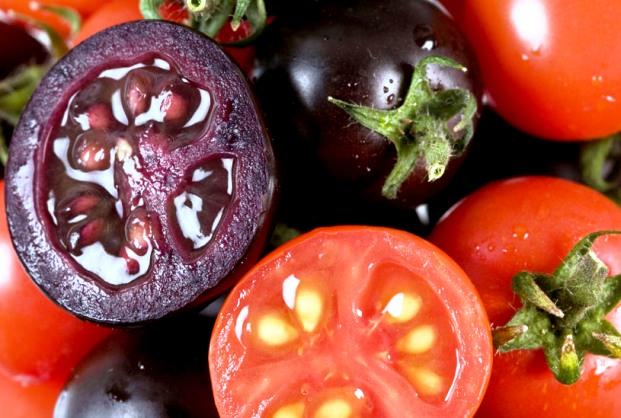 Все плюсы ГМ фиолетовых помидоров