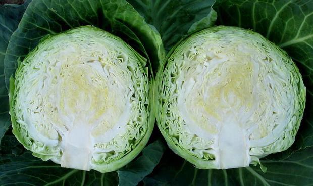 Сорт капусты белокочанной: Вспышка   f1