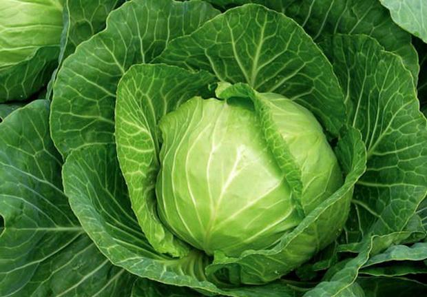 Сорт капусты белокочанной: Взрыв   f1