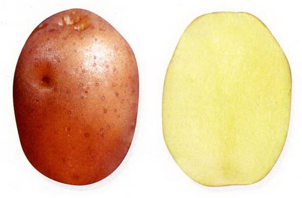 Сорт картофеля: Якутянка