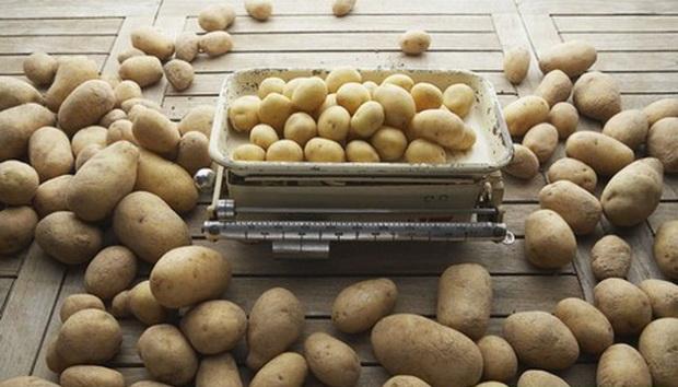Сорт картофеля: Ярла