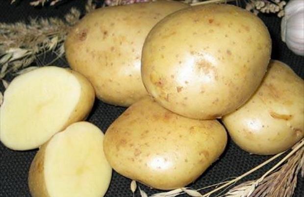 Сорт картофеля: Юбилей жукова