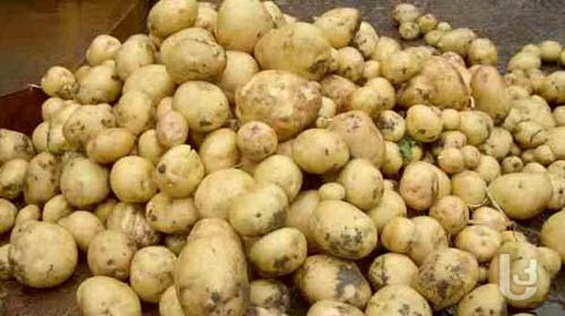 орт картофеля: Югана