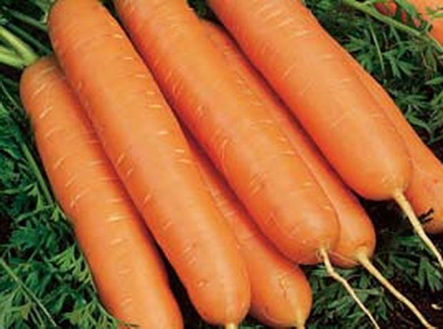 Сорт моркови: Юкон   f1