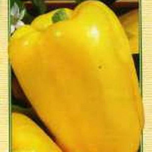 Сорт перца сладкого: Желтый букет