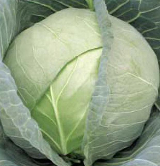 Сорт капусты белокочанной: Застольный   f1