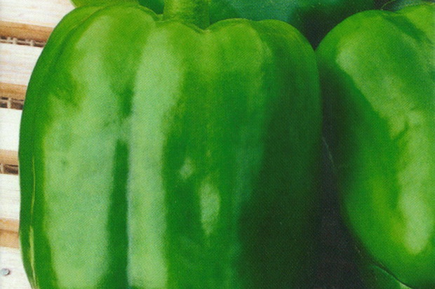Сорт перца сладкого: Зеленое чудо