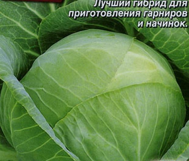 Сорт капусты белокочанной: Землячка