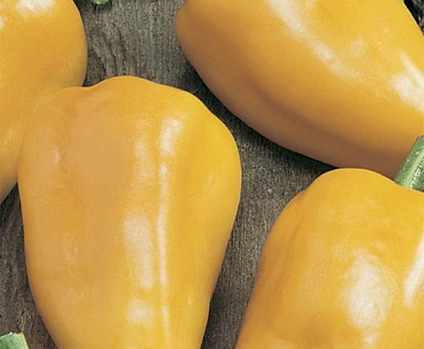 Сорт перца сладкого: Злата прага   f1