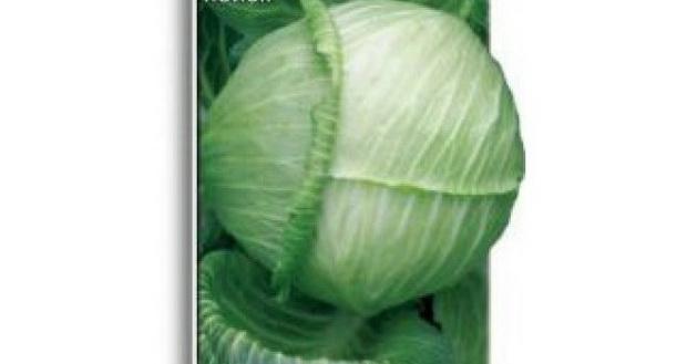 Сорт капусты белокочанной: Золотой гектар 1432