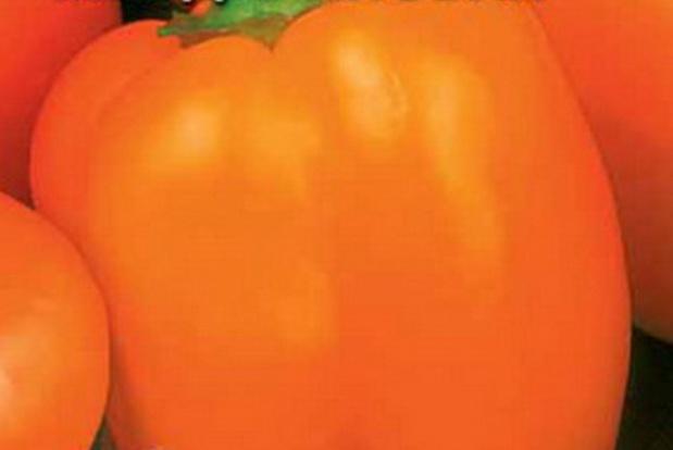 Сорт перца сладкого: Звезда востока мандариновая   f1