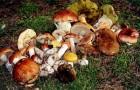 опредеоитель грибов
