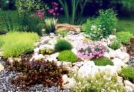 Акклиматизация растений