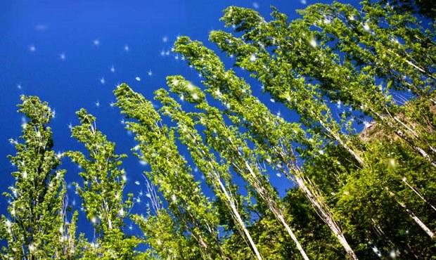 Биологи узнали, как выращивать растения без азотных удобрений