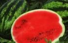 Сорт арбуза: Блейд f1