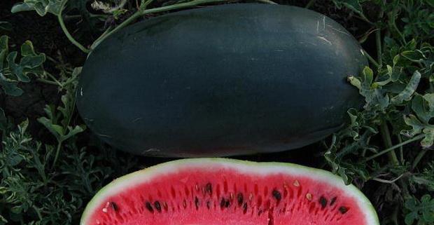 Сорт арбуза: Черный принц