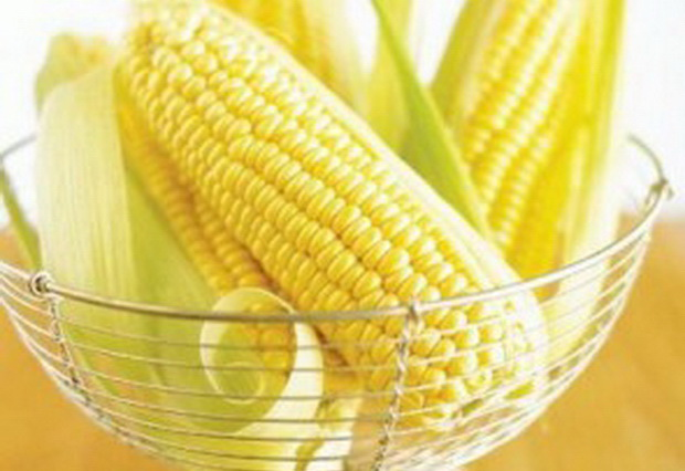 Сорт кукурузы: Харьковская 26 м