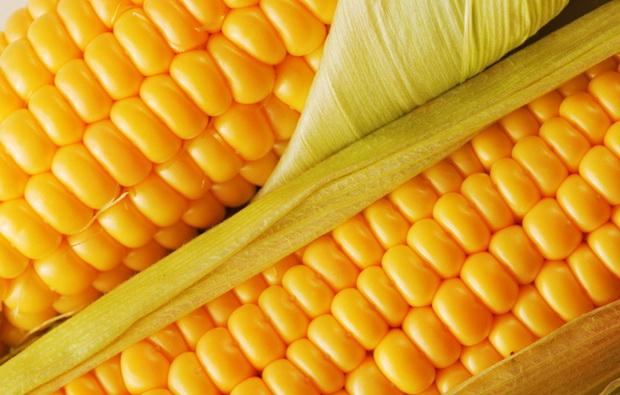 Сорт кукурузы: Хаски кс