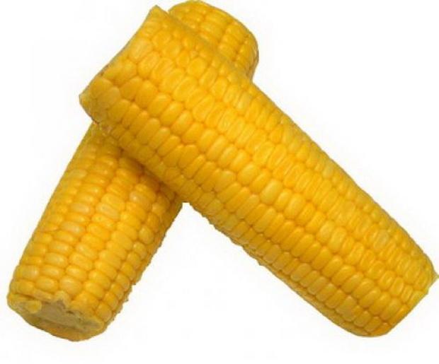 Сорт кукурузы: Хмв 5334
