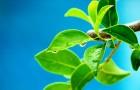 Как определяется угол роста новой ветки
