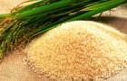 Как рис становился пищевой культурой и сорняком