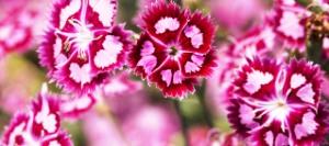 Корневищные цветы