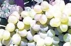 Сорт винограда: Кристалл