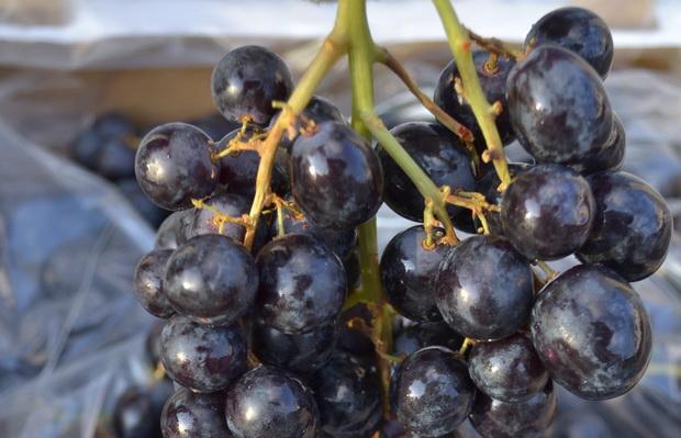 Сорт винограда: Лакхедьи мезеш
