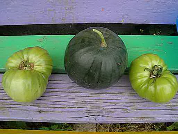 Сорт арбуза: Микадо   f1