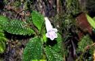 Новый вид растения под угрозой исчезновения