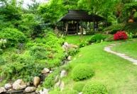 Обрезка и формирование растений японского сада