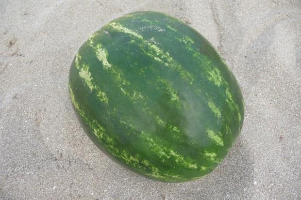 Сорт арбуза: Олинда   f1